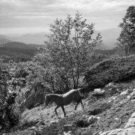 Cavalli allo stato brado nel Parco del Pollino