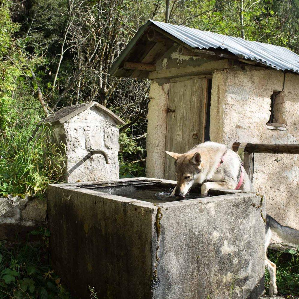 Sosta acqua, a case Bolp