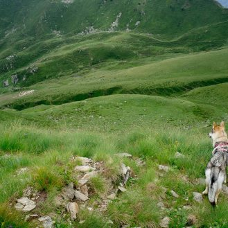 Lana si è accorta subito, fin da quassù, che laggiù alla malga c'è un interessantissimo gregge di pecore...
