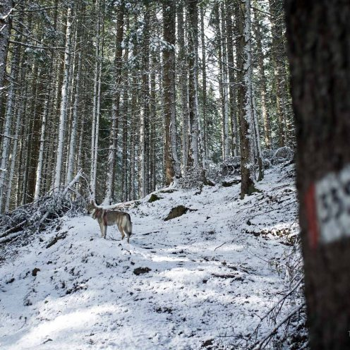 Si abbandona la forestale per il sentiero nel bosco