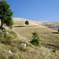 Risalendo la valle verso la Vallazza - Parco Dolomiti Bellunesi