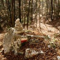 Sentiero nellla faggeta scendendo verso Aune da Malga Monsampiano - Parco delle Dolomiti Bellunesi