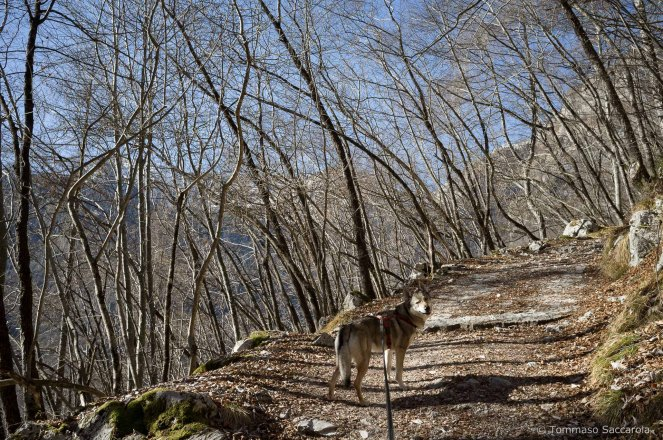Salendo sul sentiero 802 - Parco Nazionale Dolomiti Bellunesi