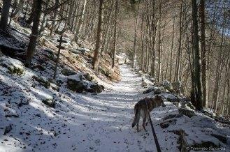 Al Bivio tra PInea e Porzil (tra mulattiera e sentiero 802) per i Piani Eterni - Parco Nazionale Dolomiti Bellunesi