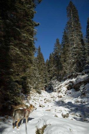 La valle del Porzil - sentiero 802 per i Piani Eterni - Parco Nazionale Dolomiti Bellunesi