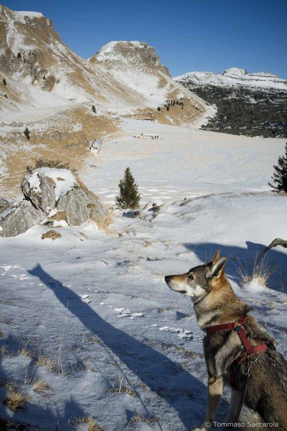 Il sentiero 802 sbuca sui Piani Eterni - Parco Nazionale Dolomiti Bellunesi