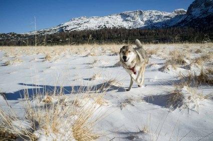 Una corsa per Tallulah sulla neve fresca dei Piani Eterni - Parco Nazionale Dolomiti Bellunesi