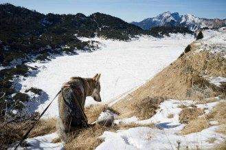 I Piani Eterni - Parco Nazionale Dolomiti Bellunesi