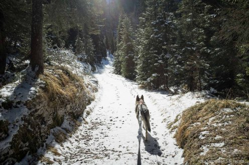 - Parco Nazionale Dolomiti Bellunesi