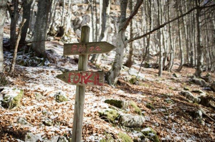Al Bivio tra PInea e Porzil (tra mulattiea e sntiero 802) per i Piani Eterni - Parco Nazionale Dolomiti Bellunesi