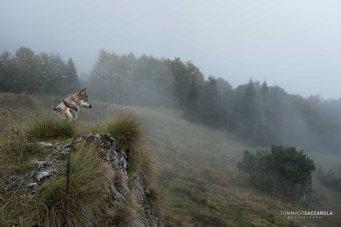 sopra la Malga Ramezza Alta - Parco nazionale Dolomiti Bellunesi