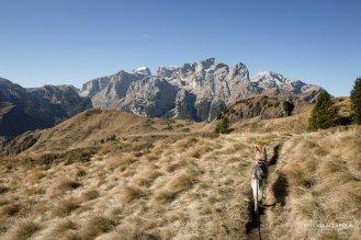 Sul sentiero 759 della cresta di Palalada: sullo sfondo il gruppo del Focobon e Vezzana, Pale di San Martino