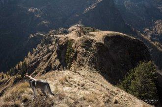 Sentiero 759, in basso la stratta sella tra la Val di Garés e la Val di Reiane