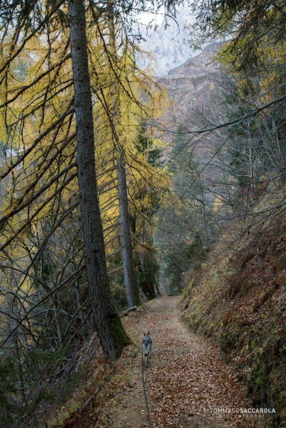 Scendendo per la mulattiera che dalla casera Campigat giunge a Col di Prà, per la Val di Reiane